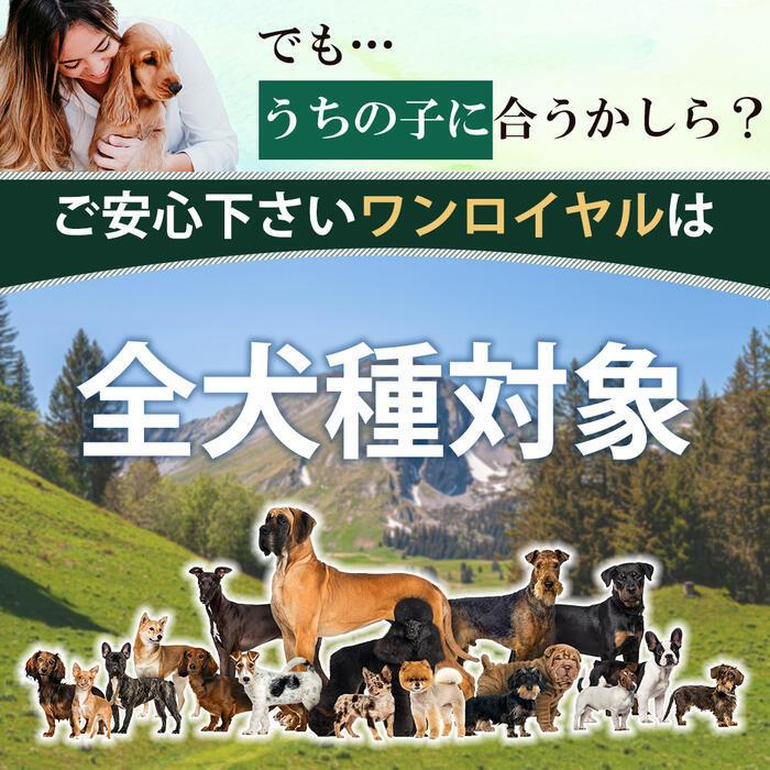 【特許成分 ECME 配合】Wan Royal ワンロイヤル 関節 サポート 犬 犬用 老犬 サプリ サプリメント グルコサミン ドッグフード おやつ ギフト プレゼント celen 19