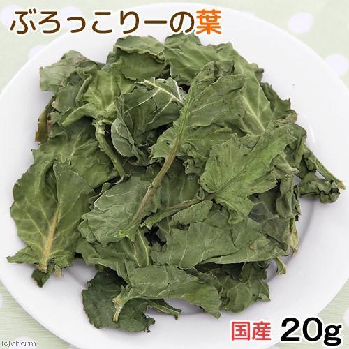 国産 ブロッコリーの葉 20g お一人様1点限り 小動物のおやつ 現品 セール商品