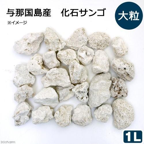 与那国島産 化石サンゴ 1L 大粒タイプ カルシウムリアクター用メディア 舗 水質調整 アウトレットセール 特集 ろ材