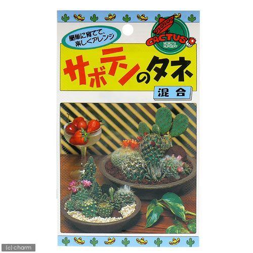 カネコ種苗 サボテンのタネ 特価品コーナー☆ 家庭菜園 通信販売 混合