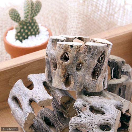 サボテンの骨 新品未使用 超人気 専門店 スライス状 中 1個 直径4.5×高さ3.5cm