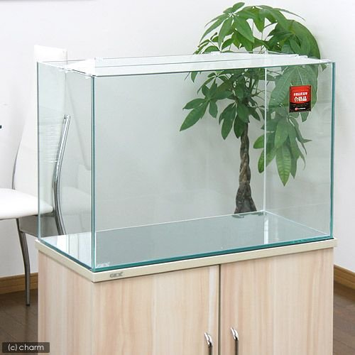 GEX グラステリア600水槽 60×30×40 60cm水槽 上品 お一人様1点限り 単体 買収 ジェックス