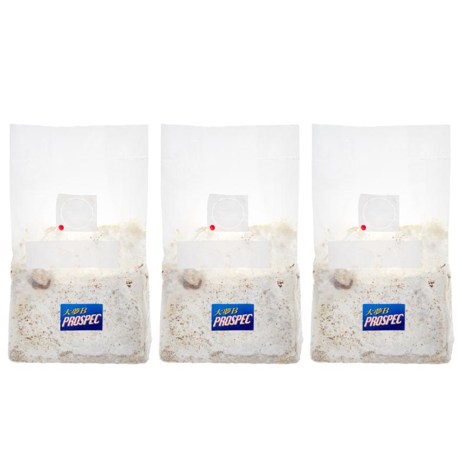 冷蔵 期間限定の激安セール 商舗 菌糸ブロック 大夢B プロスペック オオヒラタケ 4250cc 3個 ブロック 別途クール手数料 常温商品同梱不可