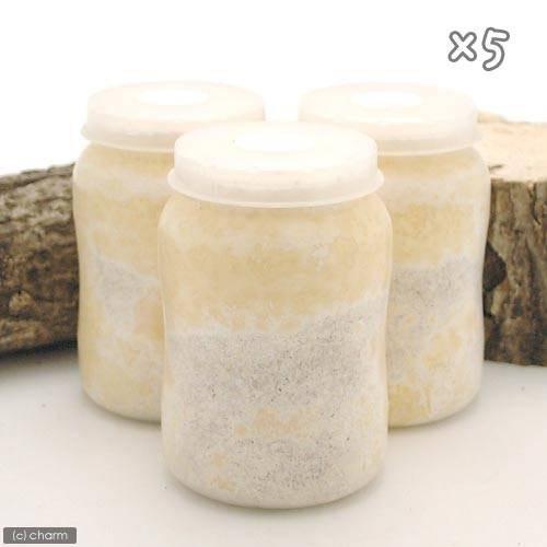冷蔵 菌糸ビン 一部予約 今季も再入荷 XL−POT カワラタケ 常温商品同梱不可 別途クール手数料 5本 800cc