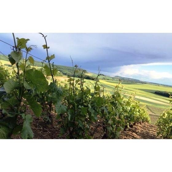 シャンパン ロベール デブロス ミレジム 2010年 750ml12%VOL  辛口 箱無し |chanpanwain|03