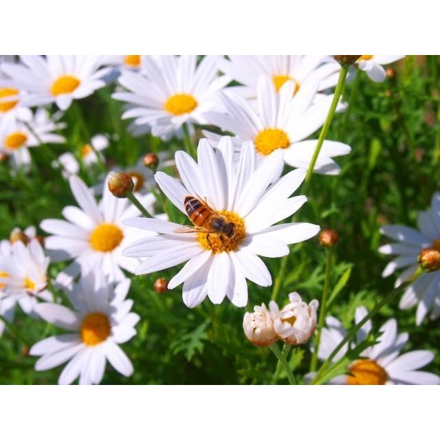 マヌカハニー エグモントハニー UMF10+ MGO263+ 250g まぬかハニー 蜂蜜 はちみつ 父の日 プレゼント 父の日 はちみつ|chibamart|05