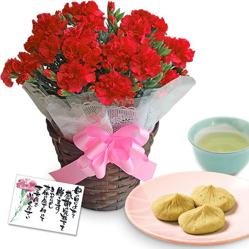 母の日 カーネーション 花 2021 プレゼント 花とスイーツ 早割 鉢植え 5号鉢 スイーツ 和菓子 栗きんとん 中津川 送料無料 ギフト ちこり村|chicory|20