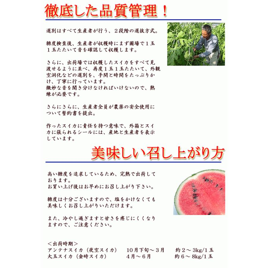 すいか ルナ・ピエナ 高級すいか 高知県夜須町産 約2キロ 糖度検査済 送料無料 土佐の高級すいか  ギフト プレゼント 西瓜 スイカ お歳暮|chokuhan|07