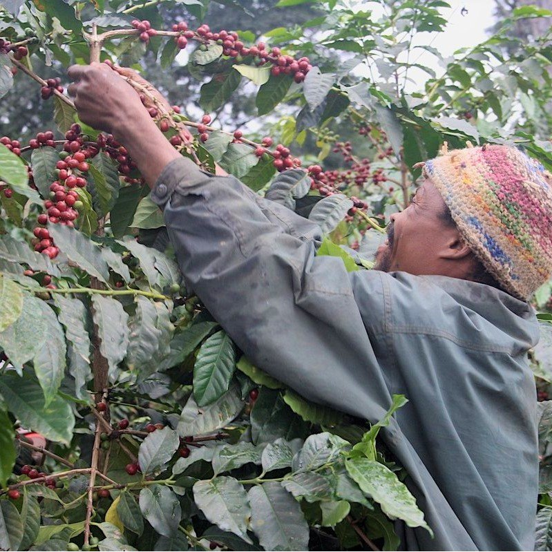 【CP】 タンザニア キリマンジャロ (100g)   【コーヒー豆 合計500gの注文でクリックポスト送料無料】|coffeemeetsbagels|03
