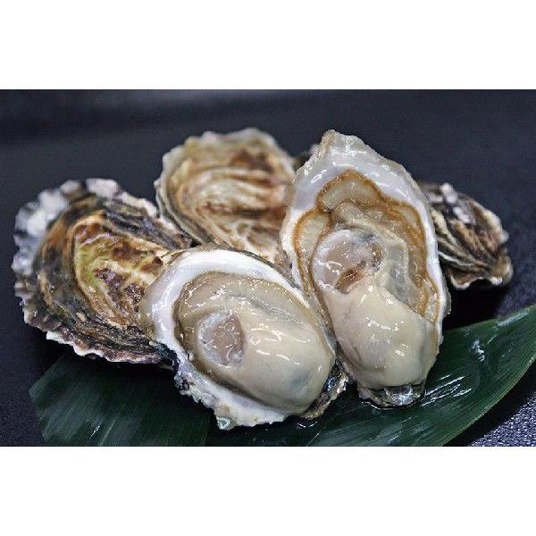 カキえもん 殻付き牡蠣 L-size(70g〜90g未満) 20個入(カキムキナイフ付き) conchiglie