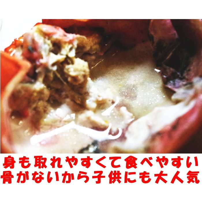 カニ 紅ずわいがに 5尾 未冷凍 水揚げ当日出荷 新鮮 ボイル 蟹 送料無料 鳥取 境港直送 かに 姿 紅ずわい蟹 300〜390g×5尾 A級品 5〜8人前 cooksanchoku 07