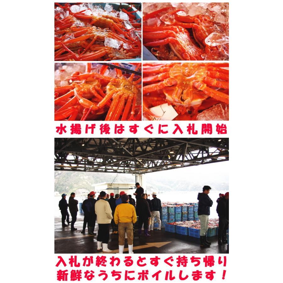 カニ 訳あり 紅ずわいがに 3尾 未冷凍 水揚げ当日出荷 新鮮 ボイル 蟹 送料無料 鳥取 境港直送 かに 姿 わけあり 紅ずわい蟹 B級品 3尾|cooksanchoku|11