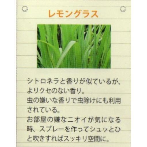 レモングラス エッセンシャルオイル DAILY AROMA 精油3ml crococko 03