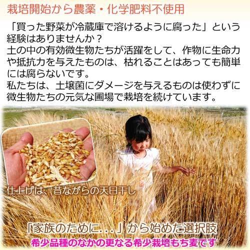 国産 無農薬 もち麦 キラリモチ お得な900g 農薬・化学肥料不使用  美味しい希少もち麦で食物繊維を実感 daichi-megumi 05