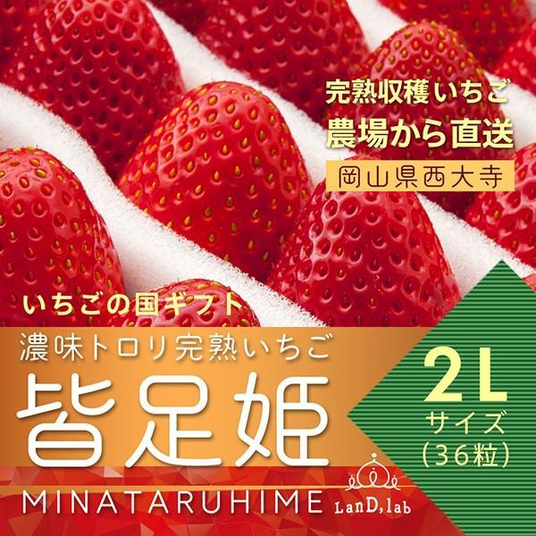 いちごの国ギフト[2Lサイズ(36粒)]濃味トロリ完熟いちご『皆足姫(みなたるひめ)』|daiki-foods