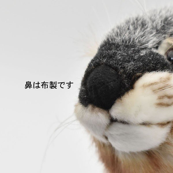 HANSA ハンサ カワウソ 3814 リアル 動物 ぬいぐるみ プレゼント ギフト 母の日 父の日|dearbear|07