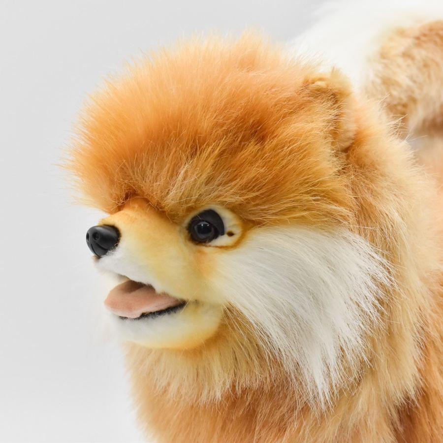HANSA ハンサ ポメラニアン 犬 7018 ギフト対象外 リアル 動物 ぬいぐるみ プレゼント ギフト 母の日 父の日|dearbear|04