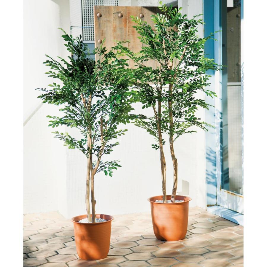 インテリア雑貨 日用品 インテリアグリーン CT触媒グリーン インテリアツリー 高さ180cm(人工観葉植物シマトネリコ)1鉢 G82629
