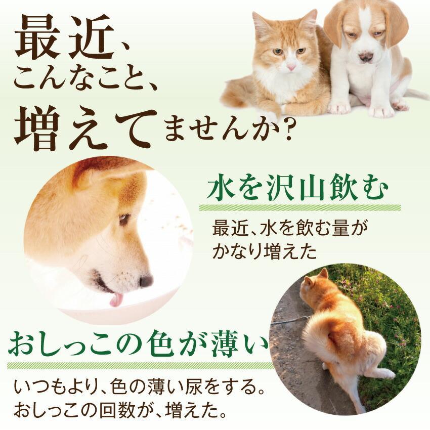 犬・猫用 サプリ(かん腎(腎臓)かなめ)無添加【メール便・送料無料】 dogdiner 04
