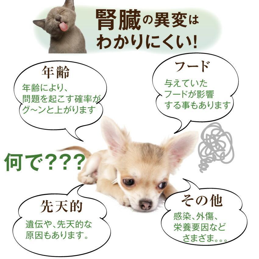 犬・猫用 サプリ(かん腎(腎臓)かなめ)無添加【メール便・送料無料】 dogdiner 06
