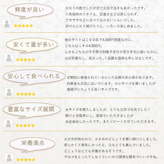 活どじょう 1kg 小小【約7cm 約550匹】 ドジョウ 食用可◎ dojou-ookawa 04
