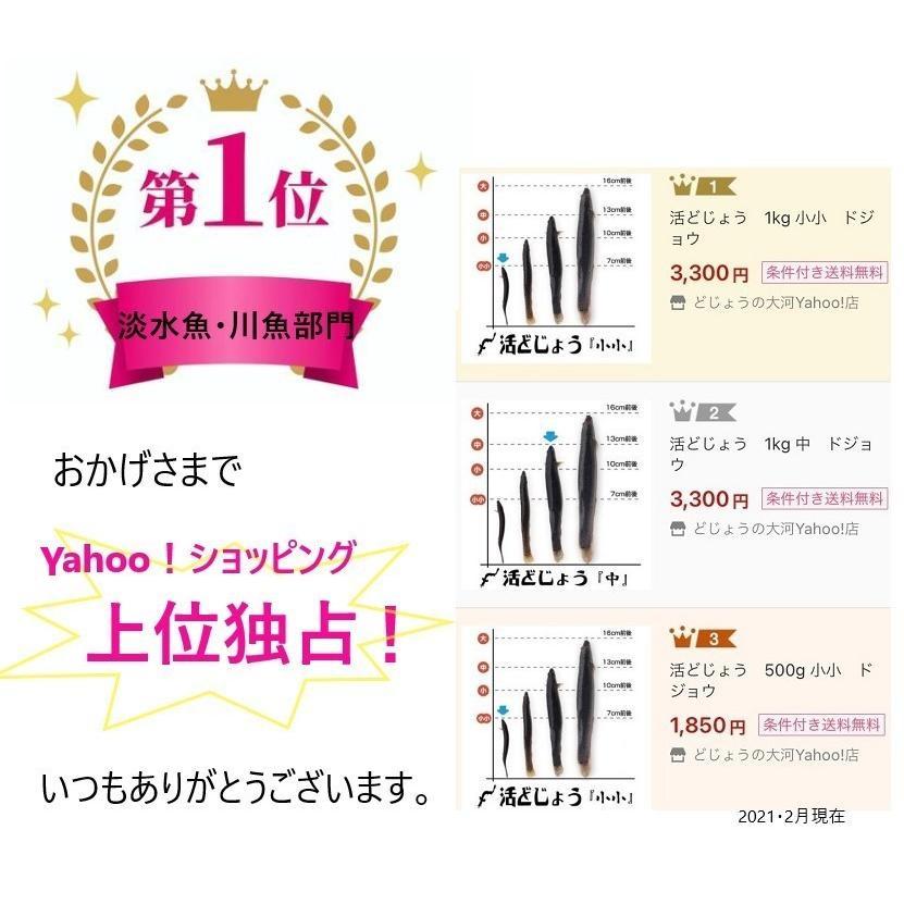 活どじょう 500g 小小【約7cm 約275匹】 ドジョウ 食用可◎|dojou-ookawa|05