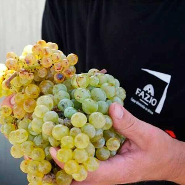 ピエトラ サクラ ビアンコ 750ml  イタリア直輸入 白ワイン Fazio(ファツィオ)|dolcevita-kagurazaka|04