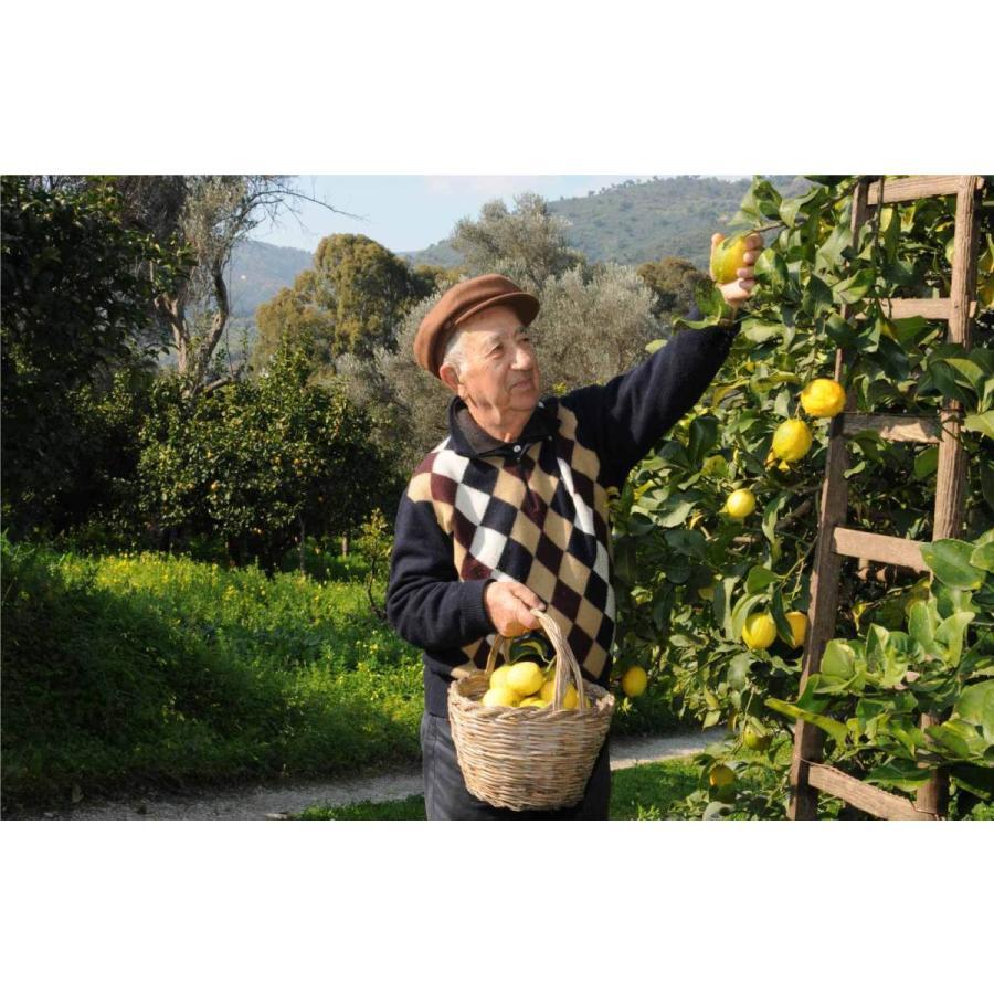 イタリア直輸入 有機レモンジュース 250ml 1ケース12本入 業務用 dolcevita-kagurazaka 02