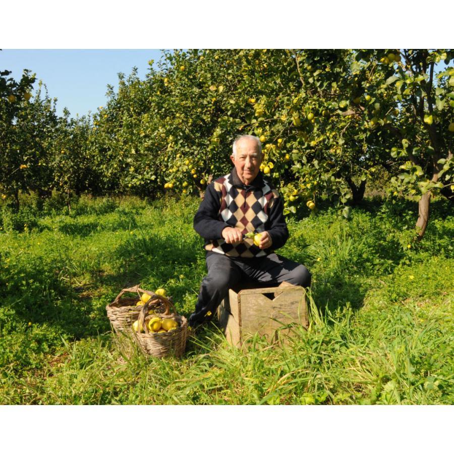 イタリア直輸入 有機レモンジュース 250ml 1ケース12本入 業務用 dolcevita-kagurazaka 03
