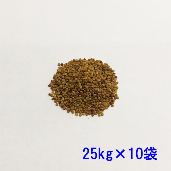 種子シロクローバ25kg×10袋