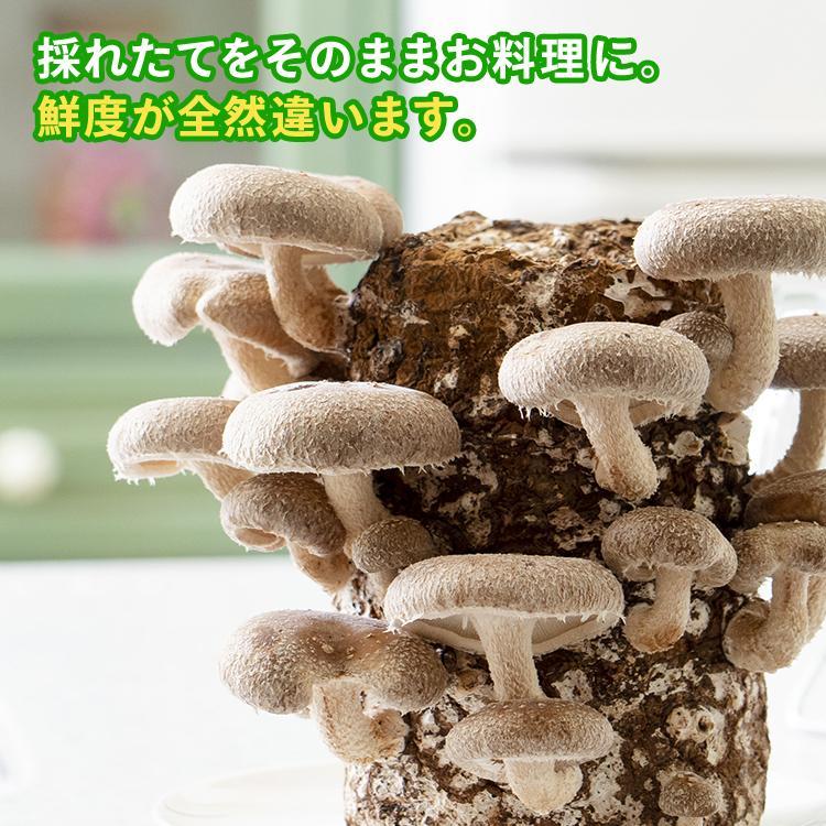 キット 椎茸 栽培