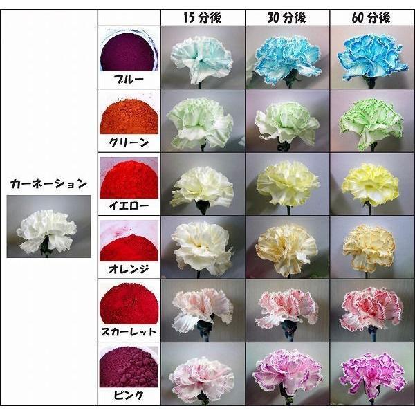 切り花染色剤 フラワーパレット 1回分×6色セット|dyestuff-chameleon|03