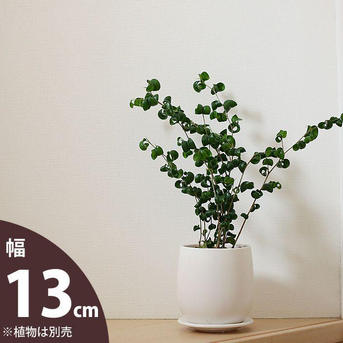 おしゃれな植木鉢 人気の白マット 待望 陶器鉢 新色 13cm