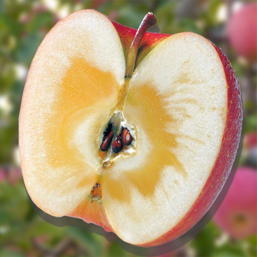 【安曇野蜜の里】大玉7kg22個前後/信州産りんご蜜入りサンふじ/こばやしのりんご/蜜を贈る/蜜入り保証/贈答用お歳暮ギフト箱入り/フルーツ専門店|e1093net|02