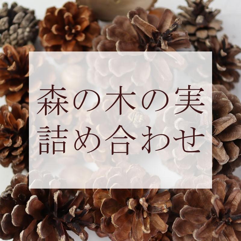 【花材】森の木の実詰め合わせ 楽しくて癒される  リース スワッグ ハーバリウム 飾り サシェ材料 オーナメント 飾りつけ 手芸用品  自然素材 まつぼっくり|e1093net