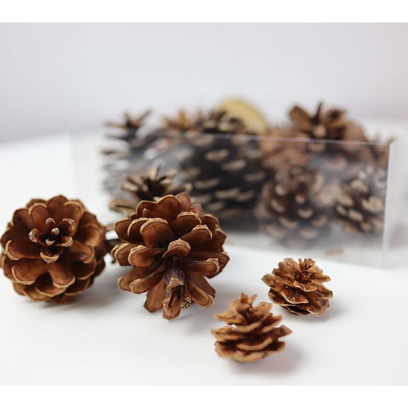 【花材】森の木の実詰め合わせ 楽しくて癒される  リース スワッグ ハーバリウム 飾り サシェ材料 オーナメント 飾りつけ 手芸用品  自然素材 まつぼっくり|e1093net|02