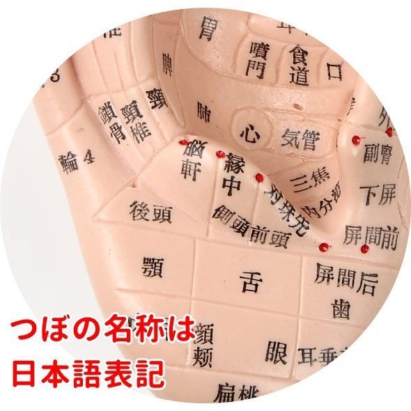 耳つぼ模型 日本語版 17cm 日本語表記 耳模型 耳介図 耳ツボ 簡易説明書付き Beautear|ear-heartdrop|05