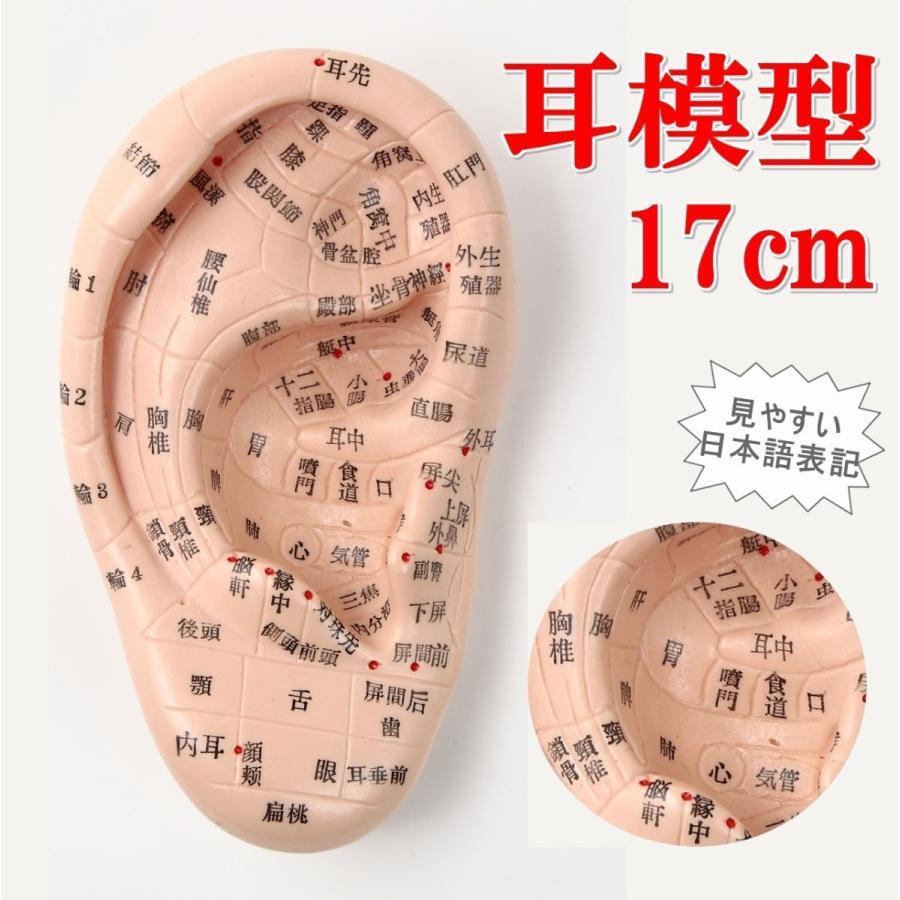 ◆Beautear Pro◆ 5点セット販売 耳つぼ模型 日本語版 17cmサイズ 日本語表記 耳模型 耳介図 Beautear|ear-heartdrop