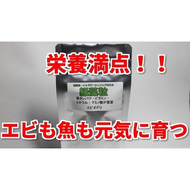 緑藻粒 シュリンプ 熱帯魚のエサ 日本正規代理店品 人気急上昇 エビオドリ製品 メダカ レッドビーシュリンプ ベタ