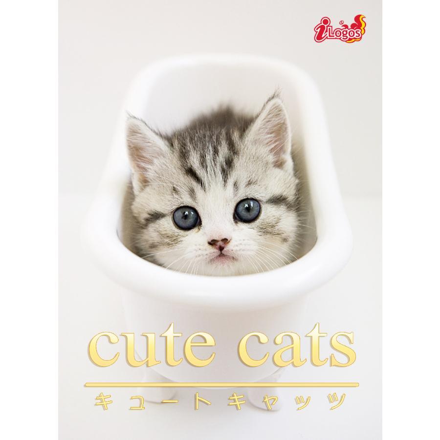 cute cats07 マンチカン 電子書籍版 / 編集:アキバ書房|ebookjapan