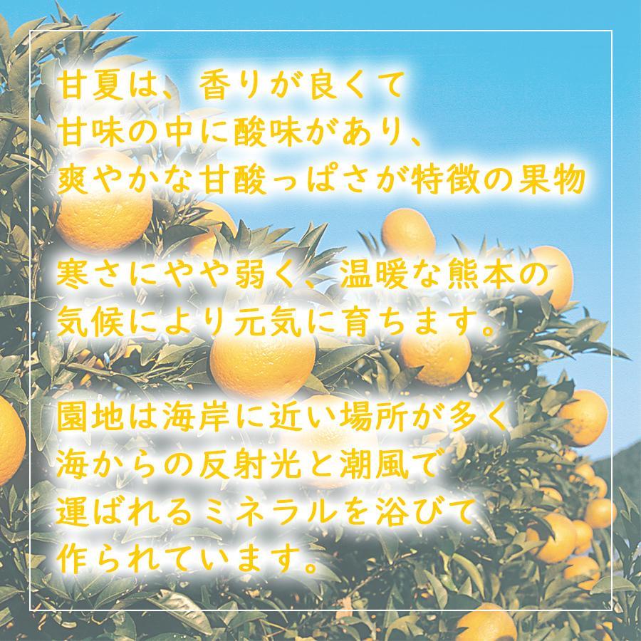 熊本県産 柑橘 甘夏みかん【約4.5kg・Lサイズ10〜13個入】|ec-kumakaren|02