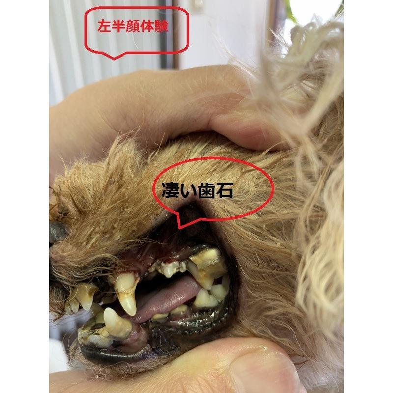イオン 犬 はみがき 無添加 塗るだけ簡単 犬デンタルケア 口臭 歯石 汚れ除去 嫌がらない 売れ筋NO1|edogmeister3|06