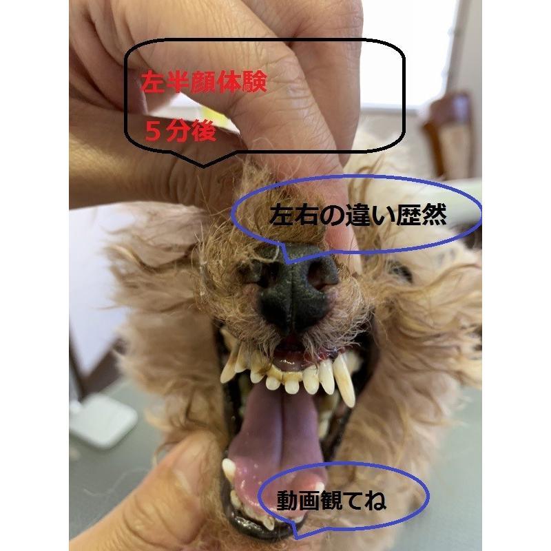 イオン 犬 はみがき 無添加 塗るだけ簡単 犬デンタルケア 口臭 歯石 汚れ除去 嫌がらない 売れ筋NO1|edogmeister3|08