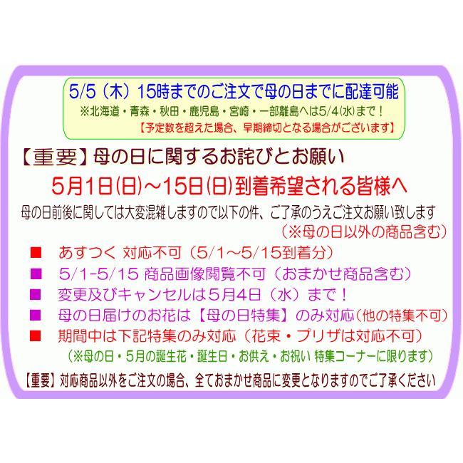 母の日 ランチイエローアレンジ4,950円 送料無料 eehana 06