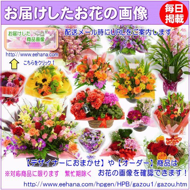 土日祝も営業 お祝い花専用フラワー3,500円 送料無料 出産祝 結婚祝 新築祝 開店祝|eehana|03