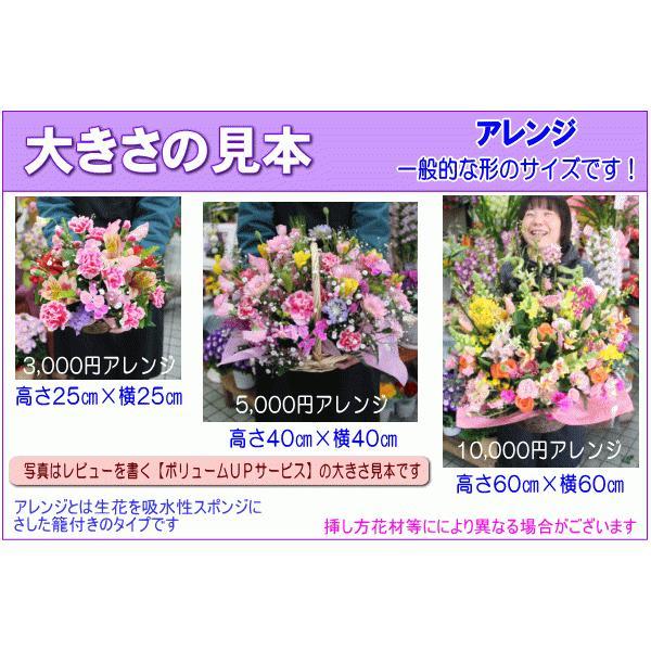 土日祝も営業 お祝い花専用フラワー5,000円 送料無料  あすつく対応 出産祝 結婚祝 新築祝 開店祝|eehana|04