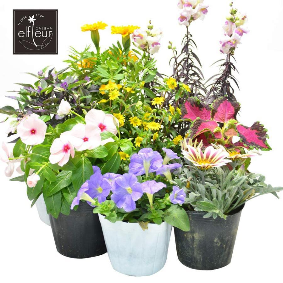 店長おまかせ 季節の花苗8個セット ガーデニング 園芸 寄せ植え 花 苗|elfleur