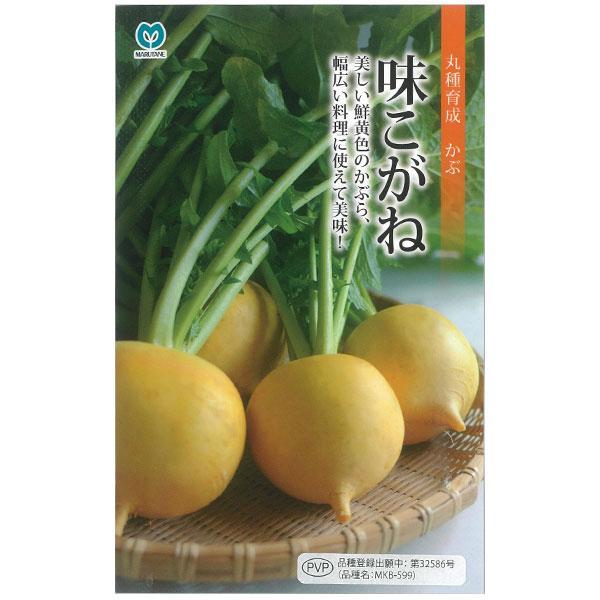 かぶ:味こがね 春 日本産 秋まき 期間限定今なら送料無料 野菜タネ