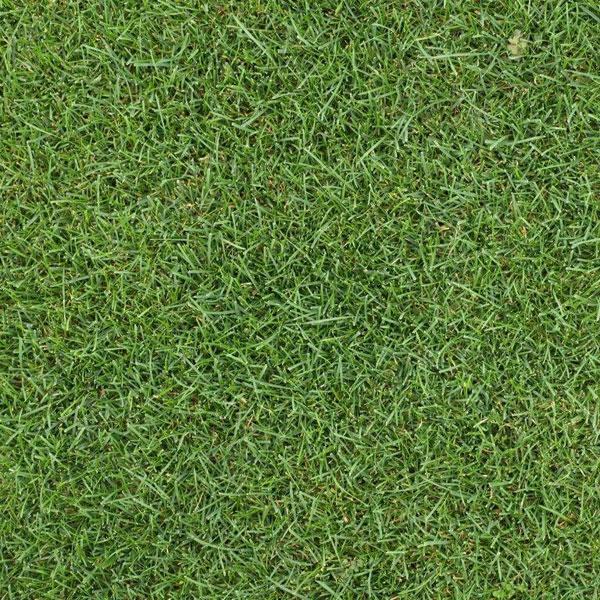 芝の種:ケンタッキーブルーグラス ブルーノート原袋22.5kg入り