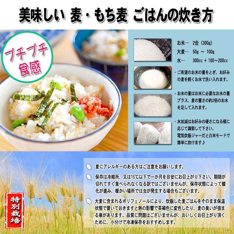 森のこかげ 丸麦 750g  無農薬 特別栽培 epicot 04